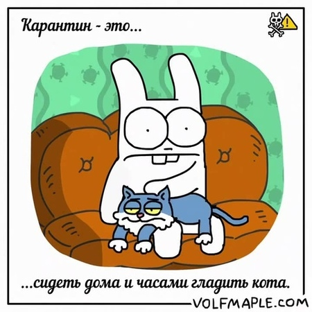 Rabbit Travel Quarantine is to pet your cat for hours · coub коуб