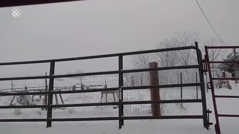 Bird Frozen To Metal Fence Rescued by Kind Man Good Samaritan