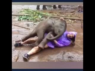 Забавные слоники! классная подборка