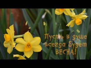 Весенние цветы видео