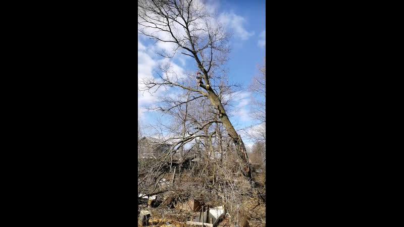 В прямом эфире срубка дерева на высотк