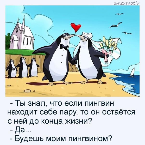 подушке картинка ты будешь моим пингвином нежного