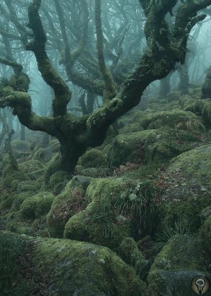 Мистические фотографии очаровательных английских лесов. Глубоко в лесах Дартмура, Англия - Лес Вистмана, древний лес, похожий на сказку. С покрытыми мхом валунами и запутанной паутиной