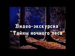 """Видео-экскурсия """"Тайны ночного леса"""""""