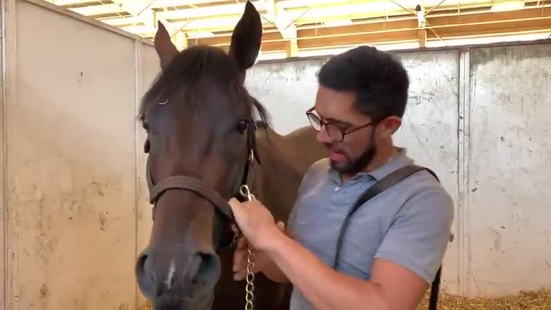 MyRacehorse Tizamagician and his groom Rigo have quite the bromance! Does it get any cuter