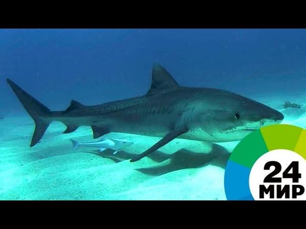 В Египте турист умер после нападения акулы - МИР 24