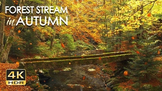 4K HDR Autumn Stream - Leaves Fall in Colorful Autumn Forest - Relaxation & Sleep Sounds - 10 Hours