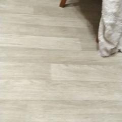 "Papillon Monica on Instagram: ""#papilion Мучаю собаку на протяжении 1 минуты"""