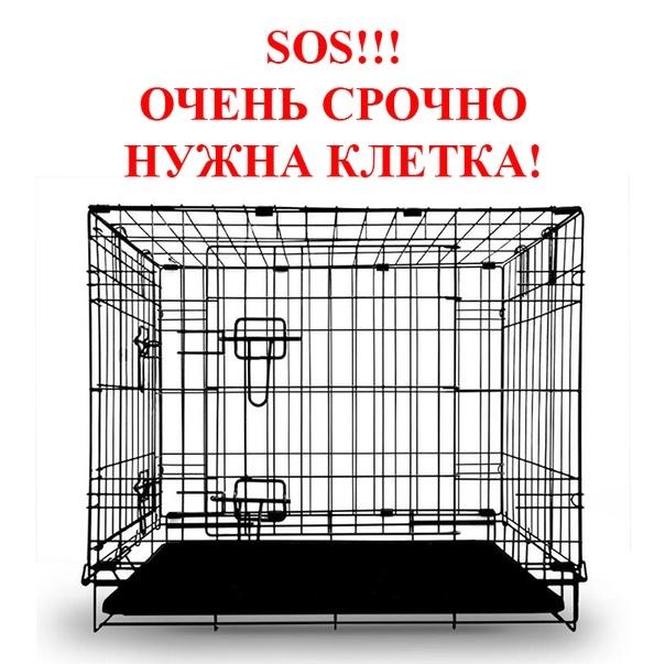 Картинки нужна клетка для кошки