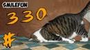 КОШКИ 2020 Смешные Кошки Приколы С Котами и Кошками Funny Cats