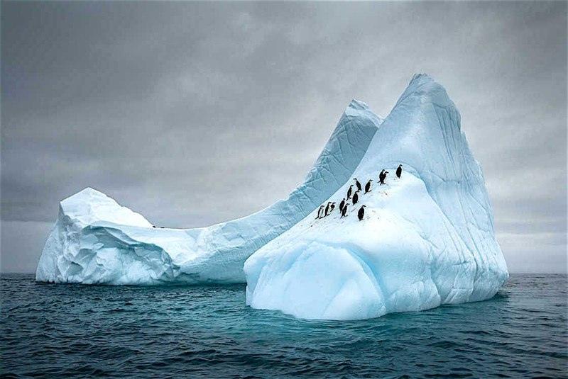Красота дикой природы, изображение №6