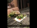 Iguana Falls Off Table Trying to Eat😂