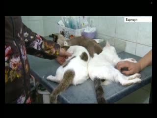 Россиянам хотят запретить держать в квартире лишних кошек и собак