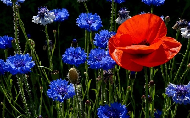 Картинки Цветы Живые Обои