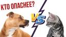 Кто опаснее – кот или стаффордширский терьер Стаффорд против кота.