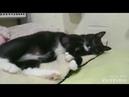 Кот Чарли. Ласковый пухлик