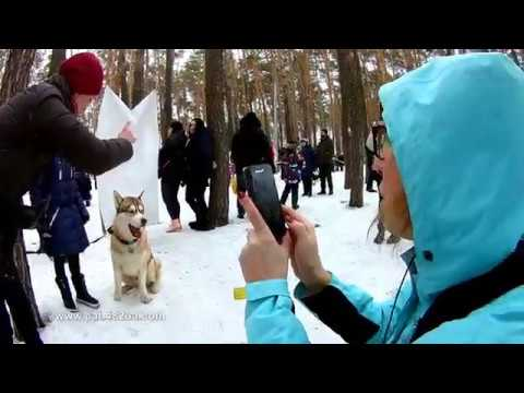 8 Winterdogfest Winter dog fest 2019 Песочин 10022019 собаки зимнии забавы