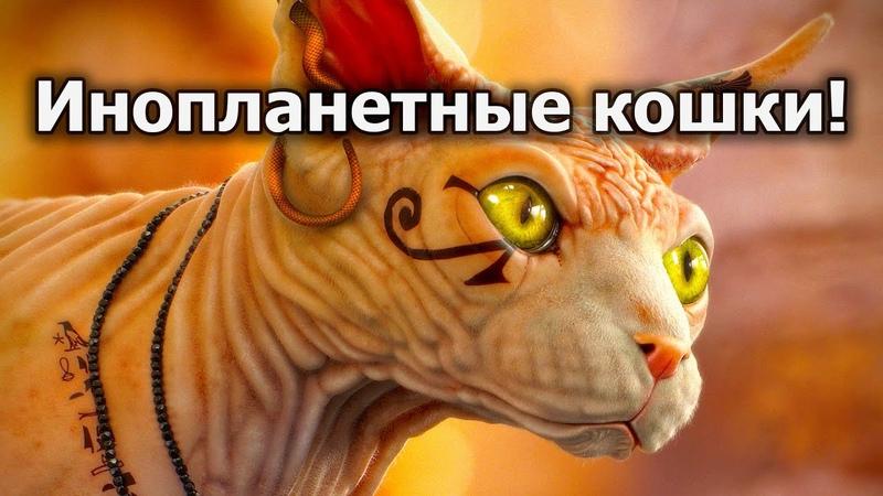 Инопланетные кошки тайные агенты космических цивилизаций