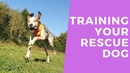 Litzi - Training Your Cyprus Rescue Dog - 4 Weeks Dog Boot Camp