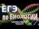 Написать ЕГЭ по биологии на 100 баллов. Синтез белка. 3' - 5' формат 2020г. Тип 4