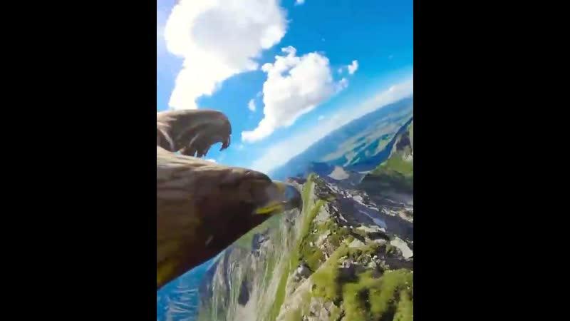 С высоты орлиного полета