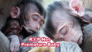 Very Sad Clip 2020- Newborn Baby Is Not Premature Baby and His Body Is Good- Adorable Wildlife 2020