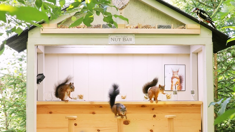 Movie Squirrels Nut Bar 2 - Busy Day at the bar