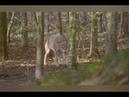 В мире диких животных