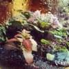 Комнатные растения (г. Клин)
