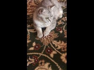 Видео от Карины Мариненко