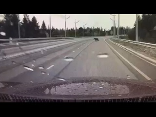 Видео от Андрея Воронова