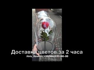 Розы в колбе Дрогобыч