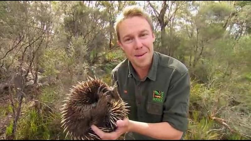 Дикая жизнь с Тимом Фолкнером The Wild Life of Tim Faulkner 2013 12