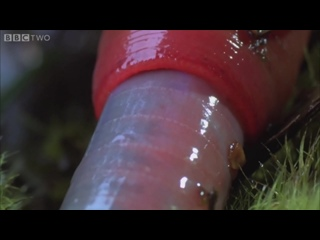 Monster leech swallows giant worm - Wonders of the Monsoon Episode 4 - BBC Two