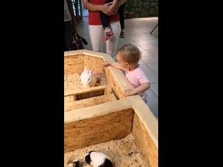 Вероника кормит кролика 1,6