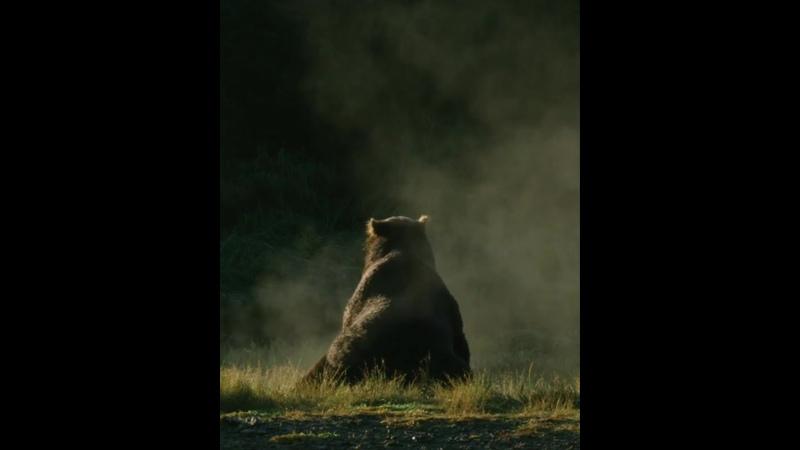 Бристольский Залив Аляска медведь просыпается