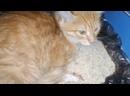 Видео от Собачье сердце - домашний приют