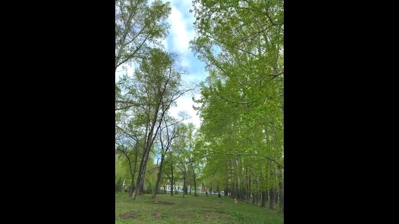 Видео от Ксении Ичетовкиной