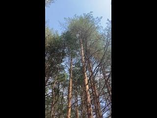 Видео от Ольги Южаковой