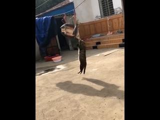 Кошку застали на месте преступления, когда она ела рыбу