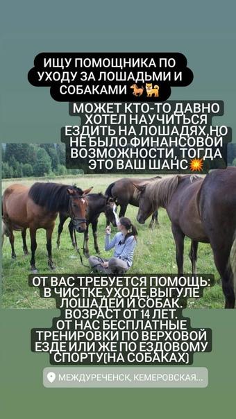 Помощь по уходу за лошадьми и собаками(прогулки, ч...