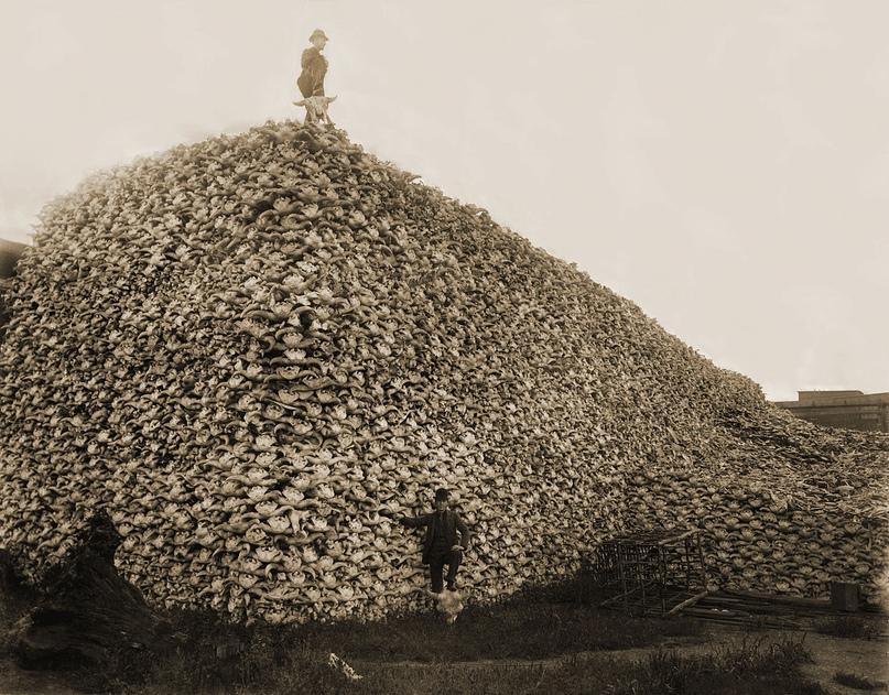 Пирамида из бизоньих черепов, 1870-е годы.