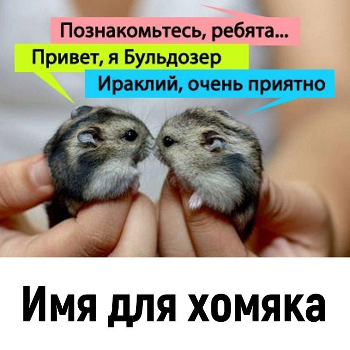 Хештег animals на   Салон Магии и Мистики Елены Руденко. Киев ,тел: +380506251562 SA8rTVYVR4g