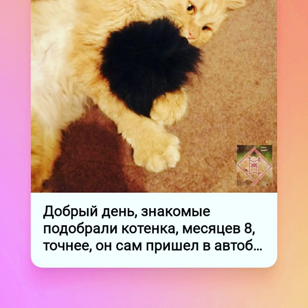 фото из альбома Елены Даниловой №9