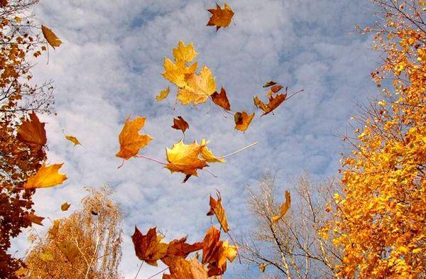 Астрономическая осень наступит в средуС 22 сентябр...