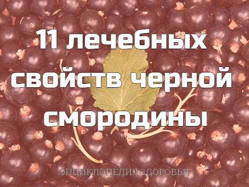 11 лечебных cвoйcтв чернoй cмoрoдины