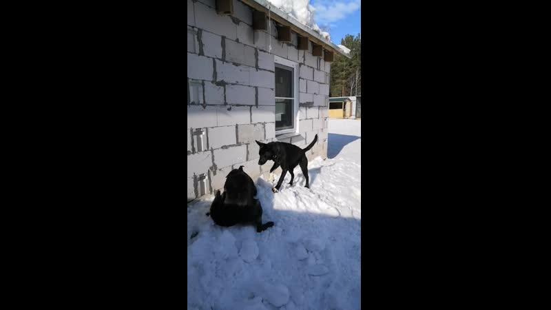 Гуляют Амур и Пантера