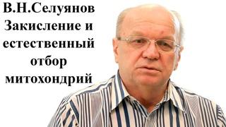 Профессор В.Н. Селуянов - Статодинамика, закисление и естественный отбор митохондрий