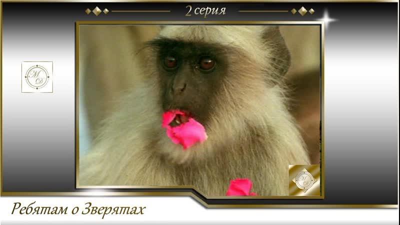 BBC Ребятам о зверятах 2 серия BBC All about animals 02