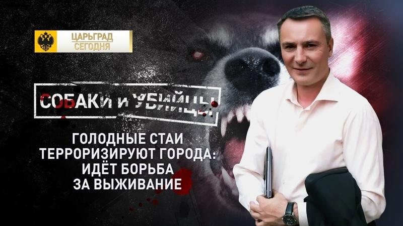 Собаки и убийцы Голодные стаи терроризируют города идёт борьба за выживание
